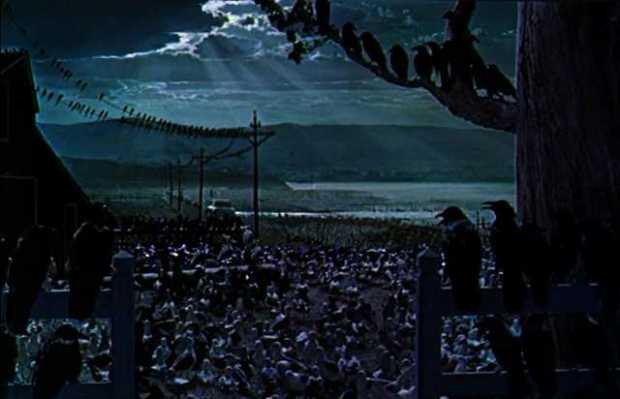 birds final scene